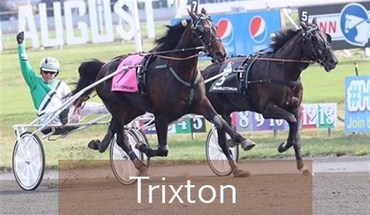 Trixton-kopiera-med-text